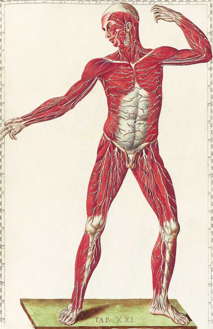 Human Anatomy Resources For Artists John T Unger