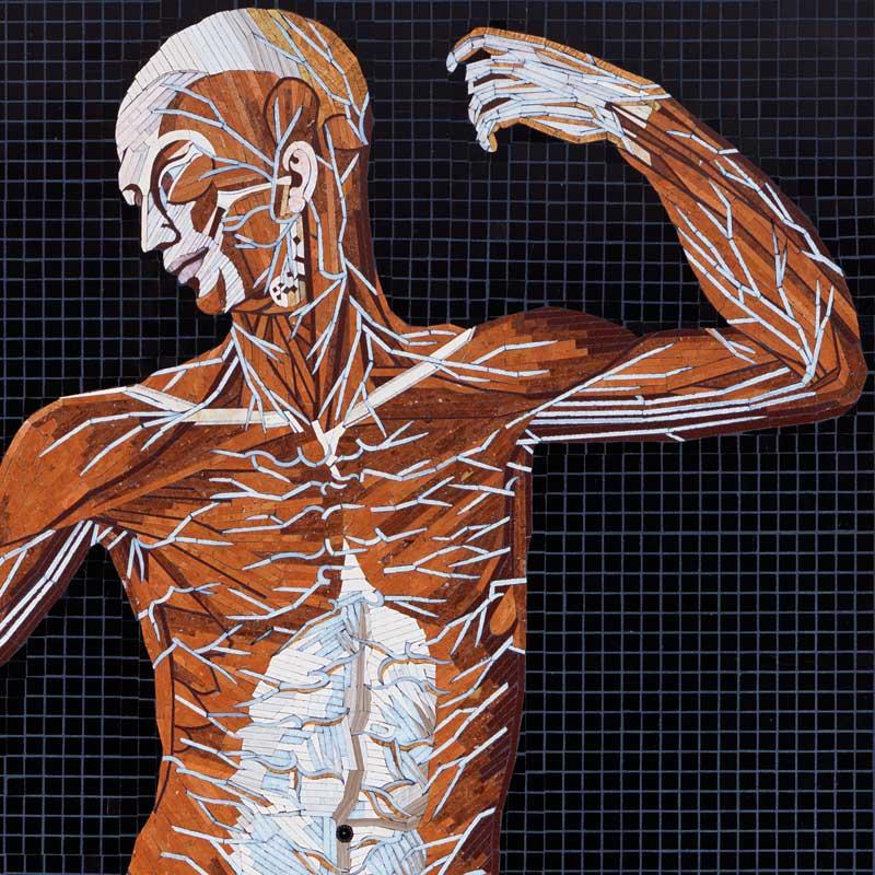 Anatomy Set In Stone 12 Mosaics Of Eustachis Anatomical Engravings