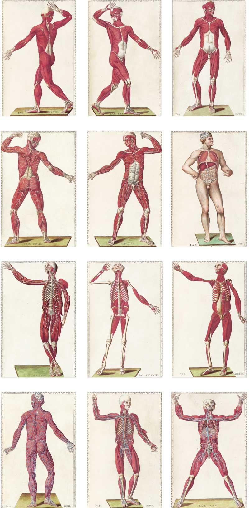 Eustachi's Tabulae anatomicae