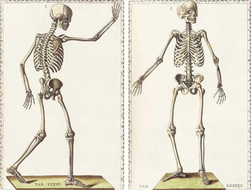 Eustatchi's skeletons